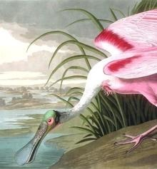 The Complete Audubon: The Birds of America
